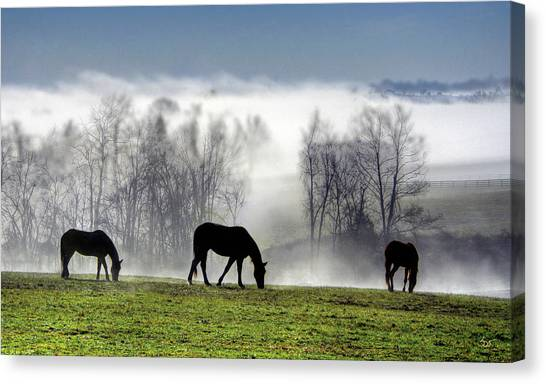 Three Horse Morning Canvas Print