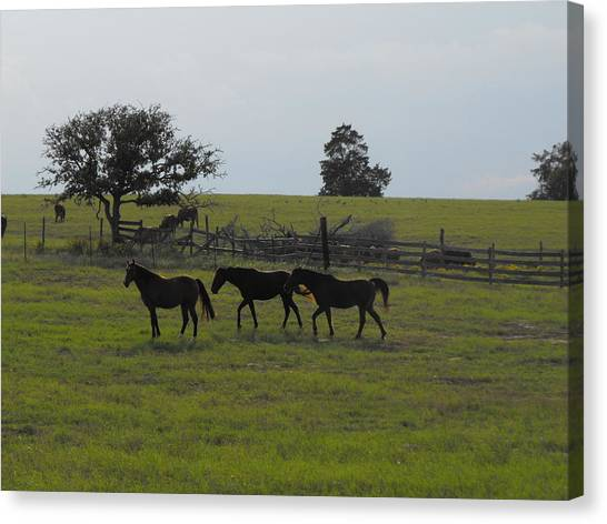 Three Horses Canvas Print by Rebecca Cearley