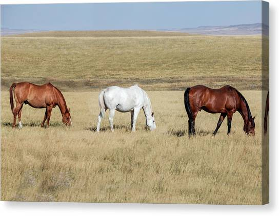 Teton Canvas Print - Three Horses by Todd Klassy