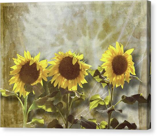 Three In The Sun Canvas Print