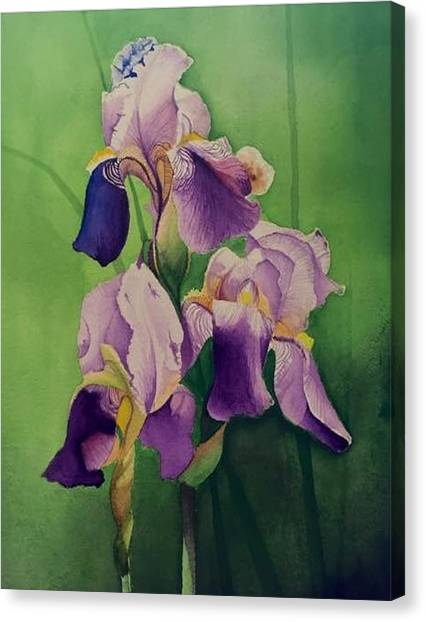 David Hoque Canvas Print - Three Iris by David Hoque