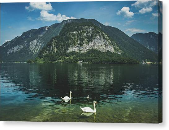 Three Lake Hallstatt Swans Canvas Print