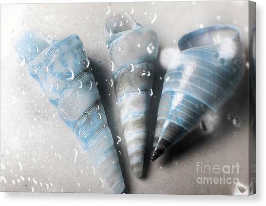 Trumpet Canvas Print - Three Little Trumpet Snail Shells Over Gray by Jorgo Photography - Wall Art Gallery