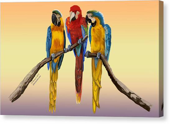 Three Macaws Hanging Out Canvas Print