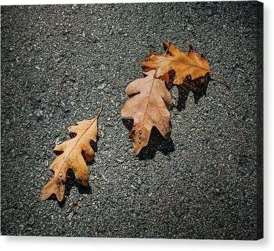 Walkway Canvas Print - Three Oak Leaves by Scott Norris