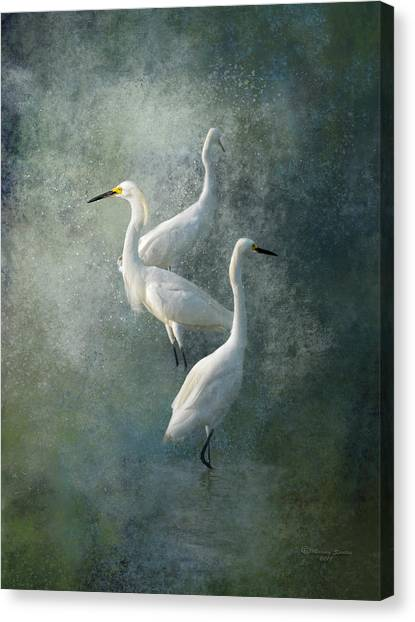 Egrets Canvas Print - Three Of A Kind by Marvin Spates