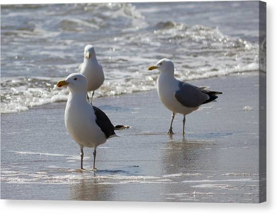 Three Of A Kind - Seagulls Canvas Print