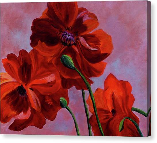 Three Oriental Poppies Canvas Print