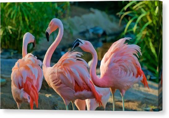 Three Pink Flamingos Strutting Their Stuff Canvas Print