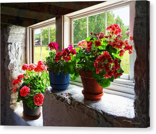 Three Pots Of Geraniums On Windowsill Canvas Print