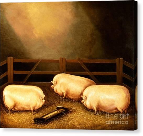 Pig Farms Canvas Print - Three Prize Pigs by English School