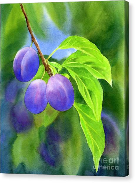 Fruit Trees Canvas Print - Three Purple Plums With Background by Sharon Freeman