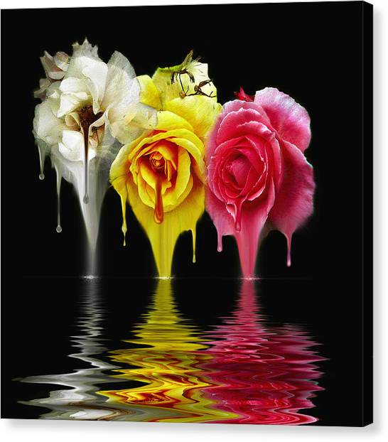 Tears Of Roses Canvas Print