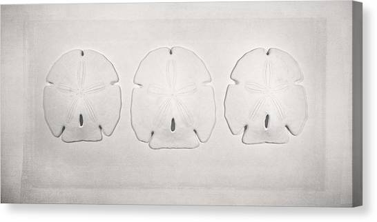 White Sand Canvas Print - Three Sand Dollars by Scott Norris
