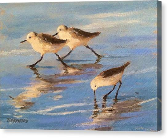 Three Sandpipers Canvas Print by Tina Obrien
