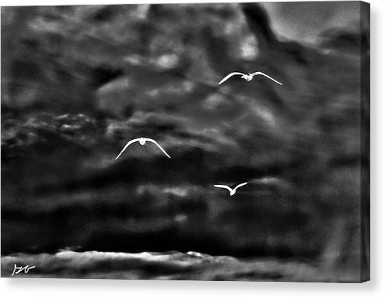 Three Seagulls Canvas Print