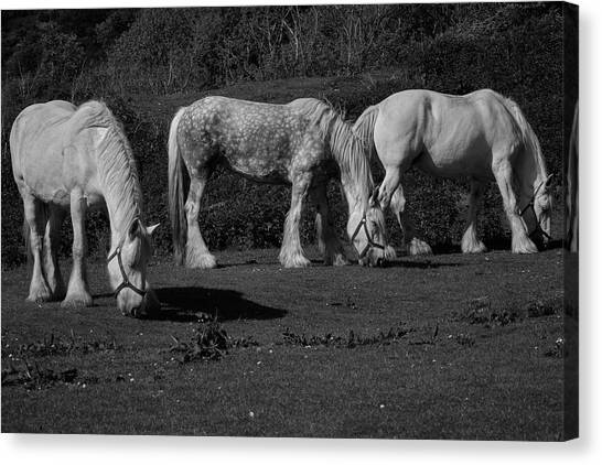 Three Shires Canvas Print