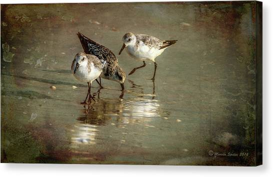 Sandpipers Canvas Print - Three Together by Marvin Spates