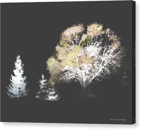 Three Trees In The Dark Canvas Print