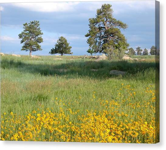 Canvas Print featuring the photograph Three Trees by Joseph R Luciano