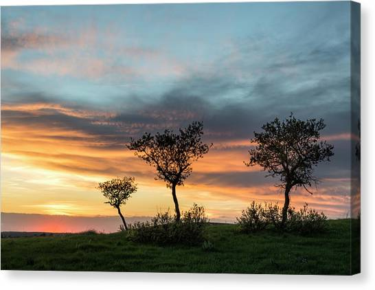 Three Trees On A Hill Canvas Print