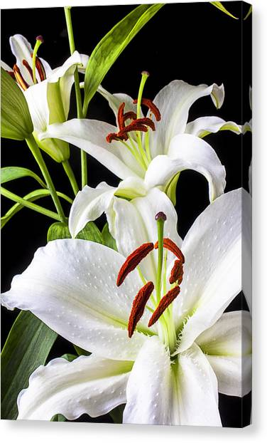 Floral Canvas Print - Three White Lilies by Garry Gay