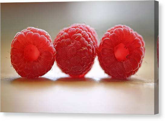 Raspberries Canvas Print - Three's Company by Evelina Kremsdorf