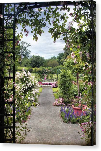 Summer Canvas Print - Through A Rose Pergola by Jessica Jenney