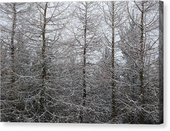 Nottinghamshire Canvas Print - Through Snow Laden Trees by Chris Dale