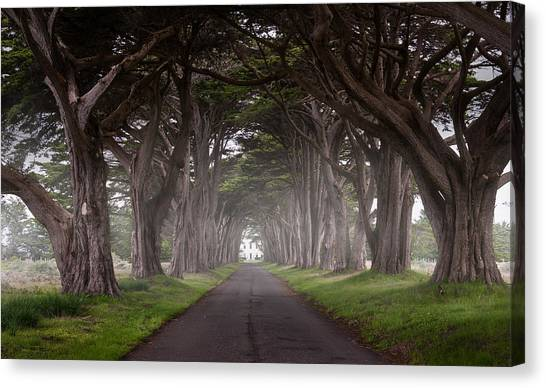 Through The Cypress Canvas Print