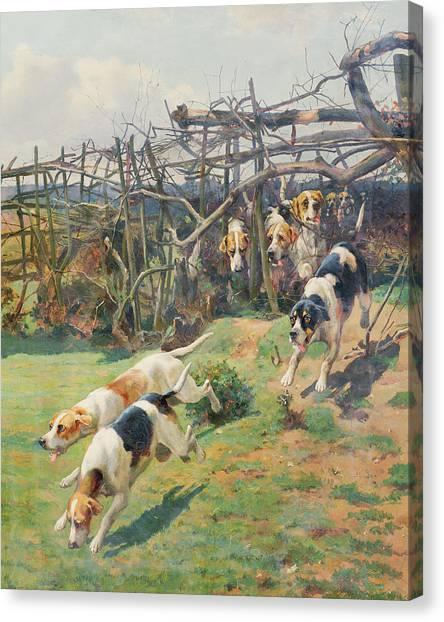 Beagles Canvas Print - Through The Fence by Arthur Charles Dodd