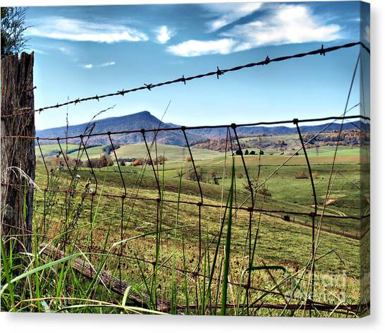 Through The Fence Canvas Print by Kathy Jennings