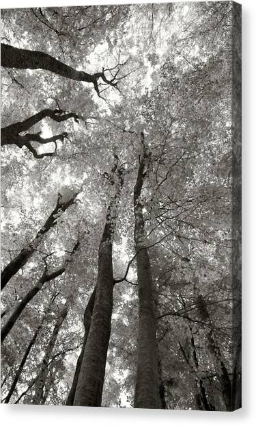 Through The Forest 2 Canvas Print by Marjan Jankovic