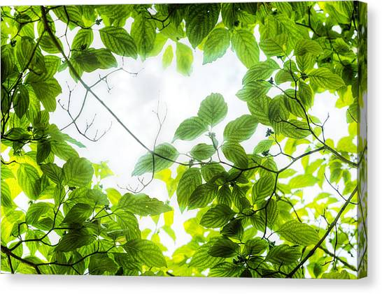 Canvas Print featuring the photograph Through The Leaves by David Coblitz