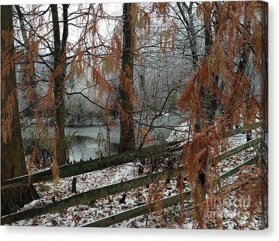 Haverford Canvas Print - Through The Leaves Of A Winter Landscape  by Clay Cofer
