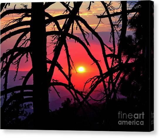 Through The Pines Canvas Print