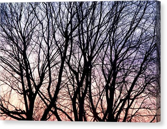 Through The Trees Canvas Print by Martin Rochefort