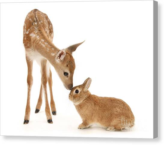 Thumper And Bambi Canvas Print