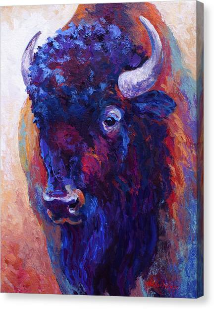 Bison Canvas Print - Thunder Horse by Marion Rose