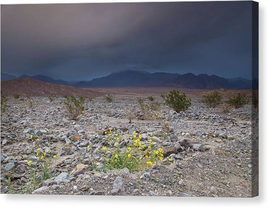 Thunderstorm Over Death Valley National Park Canvas Print