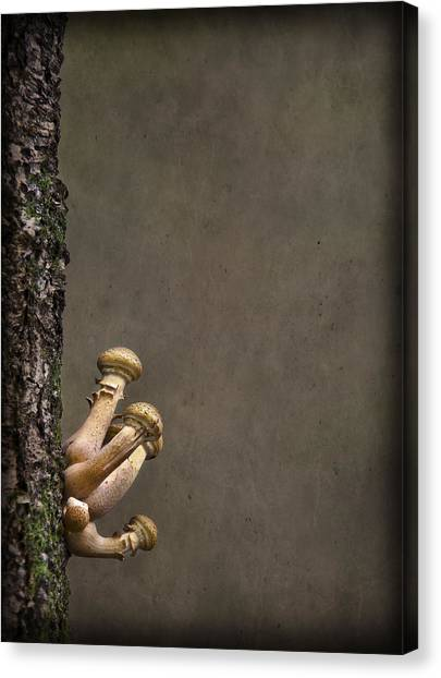 Shrooms Canvas Print - Ties That Bind by Evelina Kremsdorf