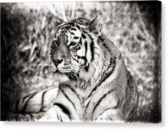 Tiger Canvas Print by Angela Aird