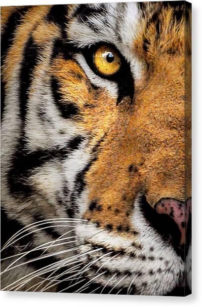 Preditory Canvas Print - Tiger by Christina Skibicki