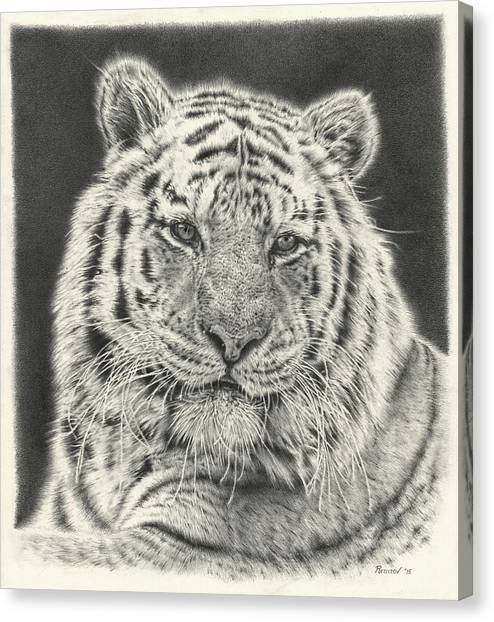 Large Mammals Canvas Print - Tiger Drawing by Remrov