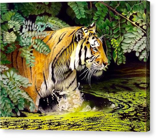 David Hoque Canvas Print - Tiger In The Sunderban Delta by David Hoque