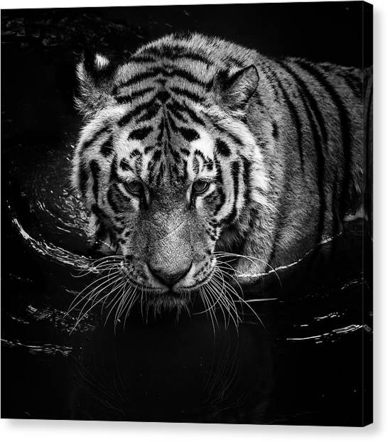 Zoo Canvas Print - Tiger In Water by Lukas Holas