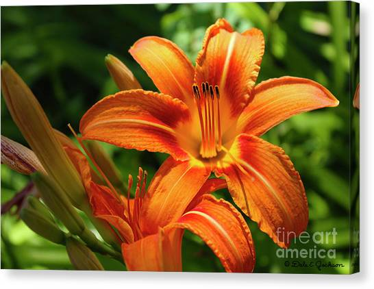 Tiger Lily Explosion Canvas Print