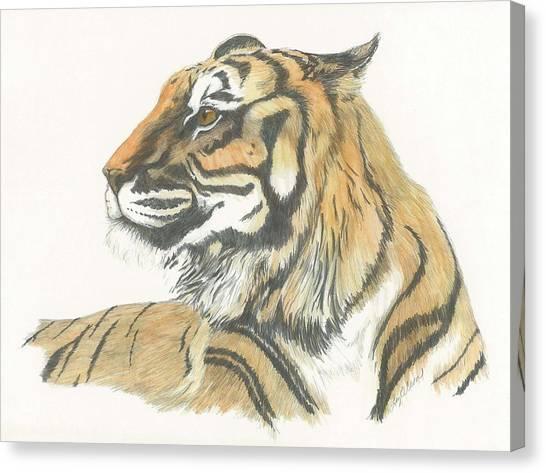 Tiger Canvas Print by Liz Rose
