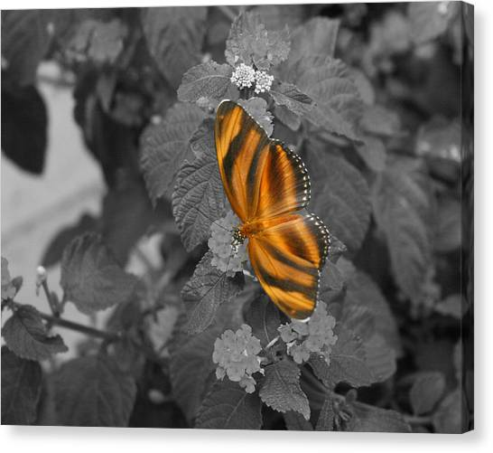 Tiger On The Wing 1 Colorized Canvas Print