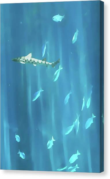 Tiger Shark Canvas Print